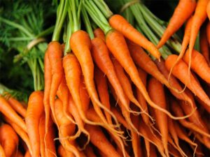 Carrots at Mountain Roots Farm in Sevierville
